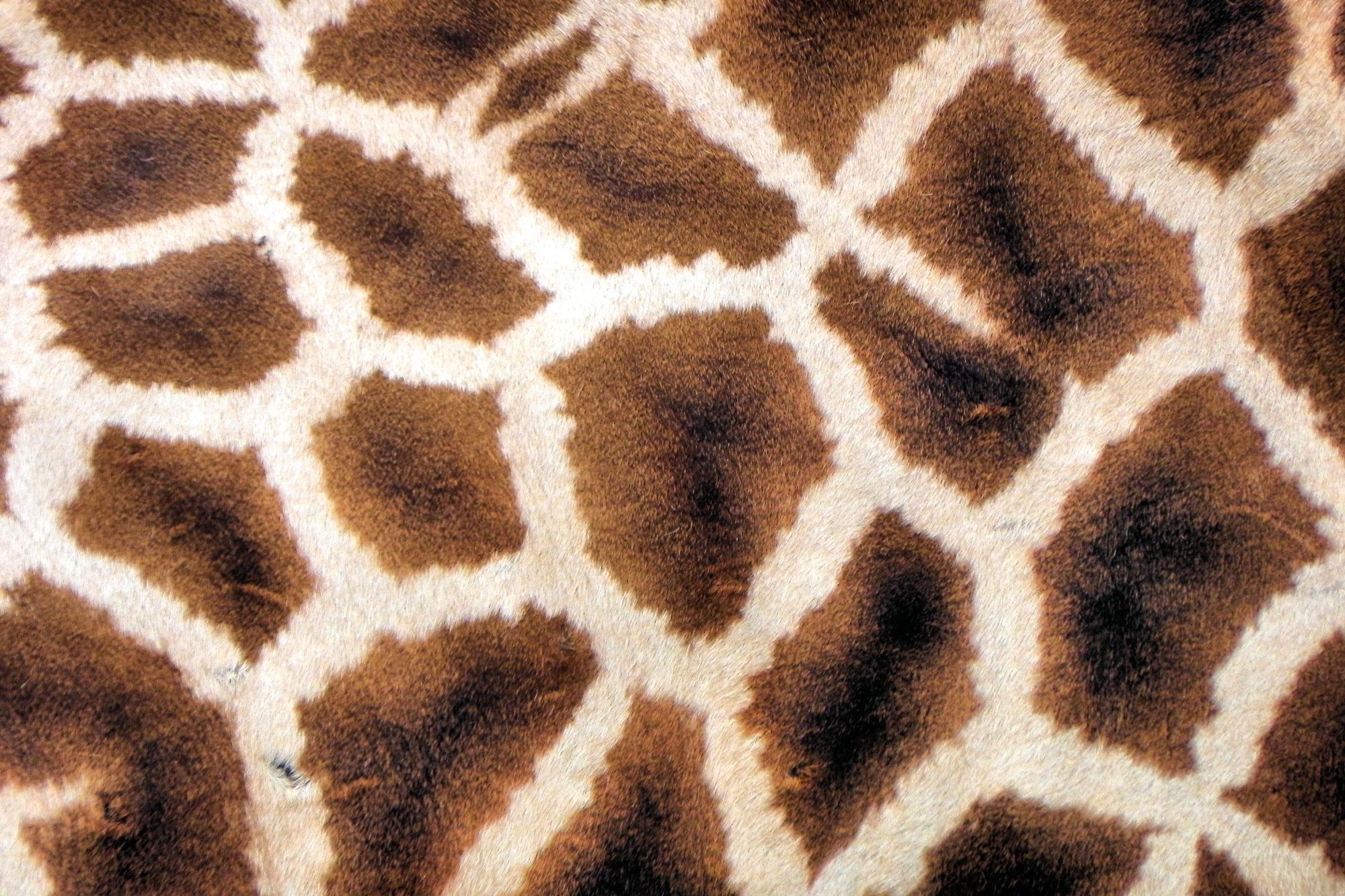 Giraffe Social Enterprises
